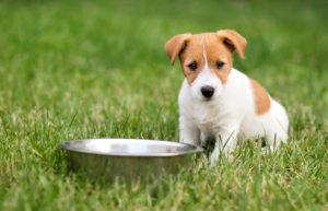 Billigt foder til hunde